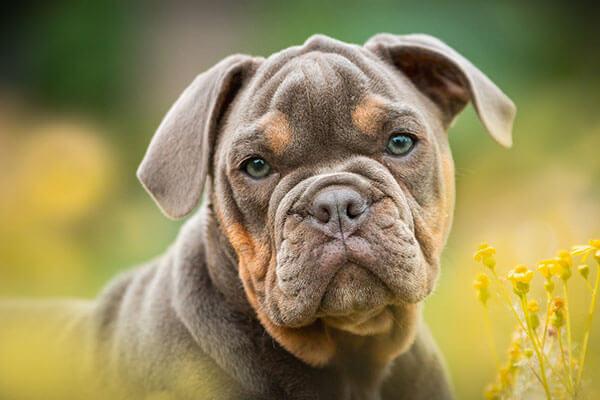 A cute dog face